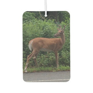 Deer Photo Car Air Freshener