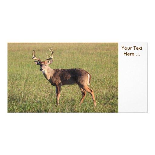 Deer Photo Card