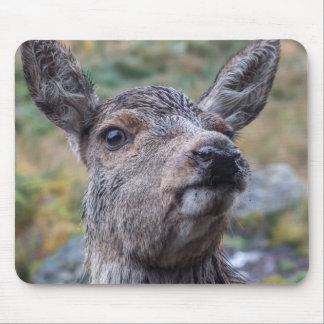 Deer photograph mouse pad