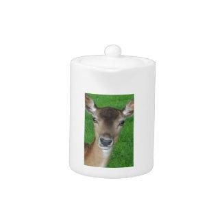 Deer Portrait Photography Wildlife