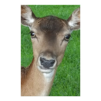 Deer Portrait Photography Wildlife Customized Stationery