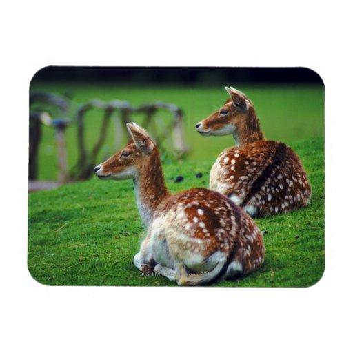 deer rectangular magnets