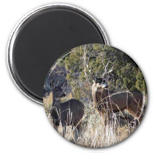 deer prodects magnets
