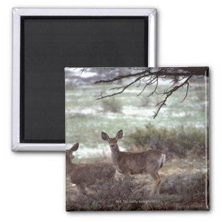 Deer running refrigerator magnet