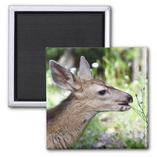 Deer Square Magnet
