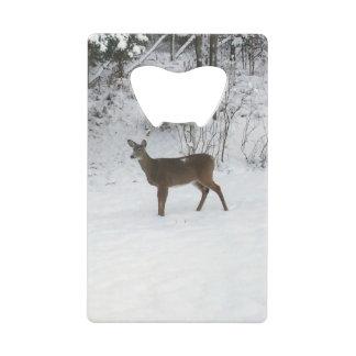 Deer Standing in Snow