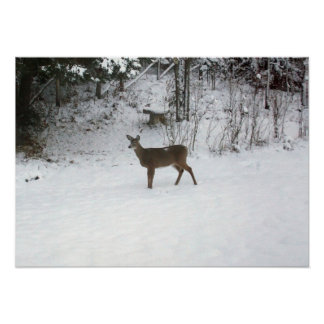 Deer Standing Watch Poster