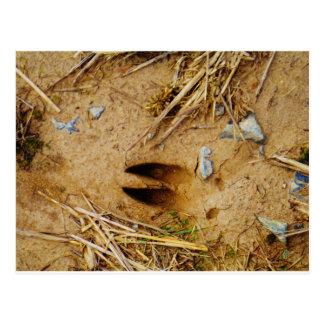 Deer Track Postcard