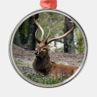 Deer - wild animal - gorgeous christmas ornaments