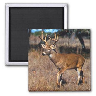 Deer Wildlife Magnet