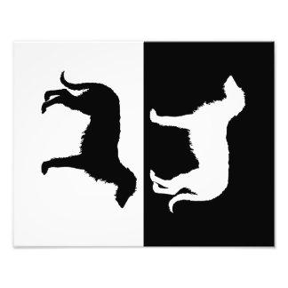 deerhound photo