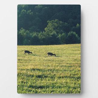 Deers Grazing Plaque