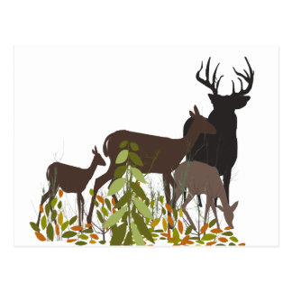 Deers in the Forest Wild Animals Postcard