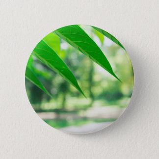 Defocused and blurred branch ailanthus 6 cm round badge