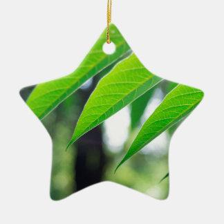Defocused and blurred branch ailanthus ceramic star decoration
