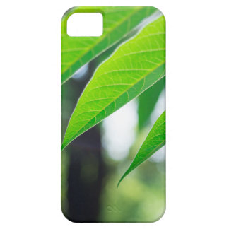 Defocused and blurred branch ailanthus iPhone 5 cover