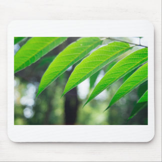 Defocused and blurred branch ailanthus mouse pad