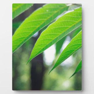 Defocused and blurred branch ailanthus plaque