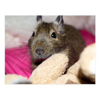 Degu Behind Fallen Teddy Bear Postcard