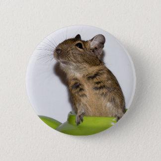 Degu in Green Photograph 6 Cm Round Badge