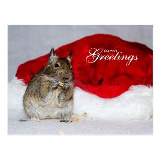 Degu & Santa Hat Season's Greetings Postcard