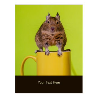 Degu Sitting on a Mug Postcard