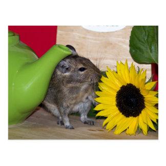 Degu with Teapot & Sunflower Postcard