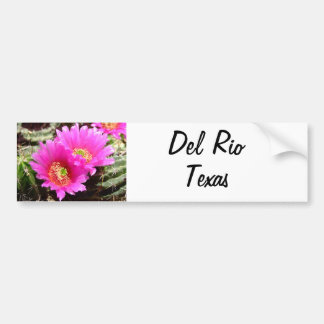 Del Rio Texas souvenirs pink cactus flower Car Bumper Sticker