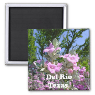 del rio texas souvenirs purple sage magnet