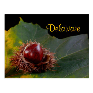 Delaware Autumn Leaf With Nut Postcard