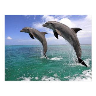 Delfin,Delphin,Grosser Tuemmler,Tursiops 4 Postcard