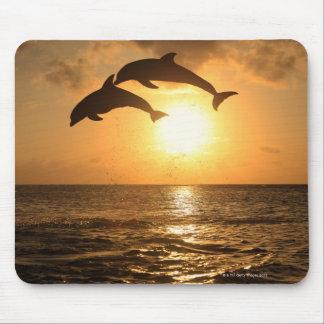 Delfin,Delphin,Grosser Tuemmler,Tursiops Mouse Pad