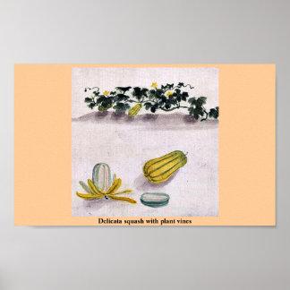 Delicata squash with plant vines poster