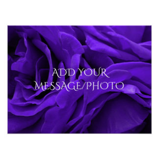 Delicate bright purple roses flower photo poster