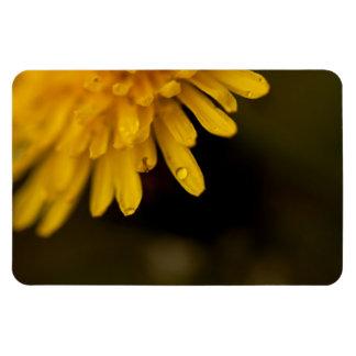 Delicate Dandelion Magnets