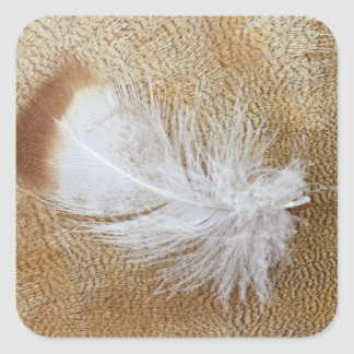 Delicate Goose Feathers Square Sticker