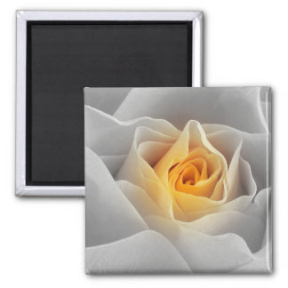 Delicate Gray Rose Magnet
