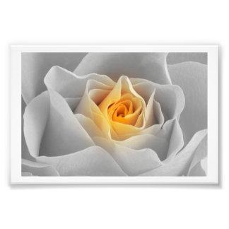 Delicate Gray Rose Photo Print