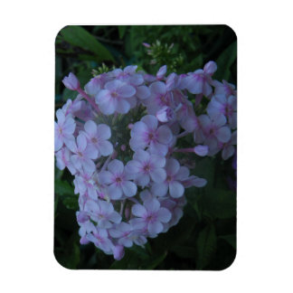 Delicate Lavender Beauties Rectangular Photo Magnet
