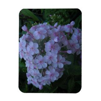 Delicate Lavender Beauties Rectangular Photo Magnet