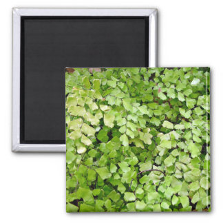 Delicate leafy background magnets