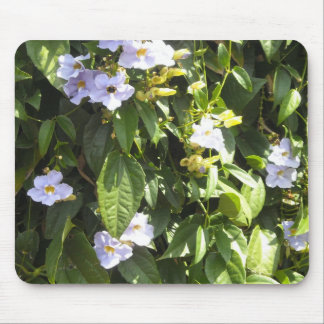 Delicate Morning Glories Mouse Pad