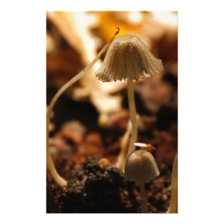 Delicate Mushrooms Custom Stationery