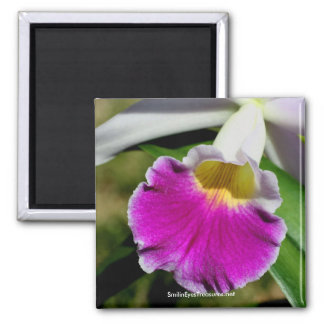 Delicate Orchid Flower Photography Magnet