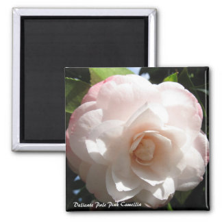Delicate Pale Pink Camellia Magnet