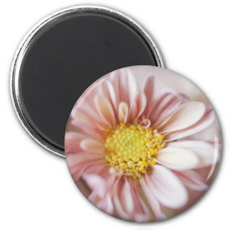 Delicate Peach and Yellow Flower Magnets