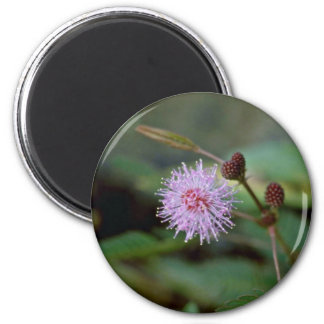 Delicate Pink Cluster Flower Closeup flowers Magnets