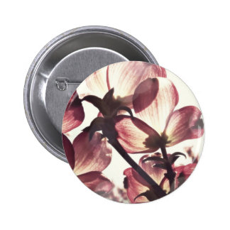 Delicate Pink Dogwood Flower Blossoms Pinback Buttons