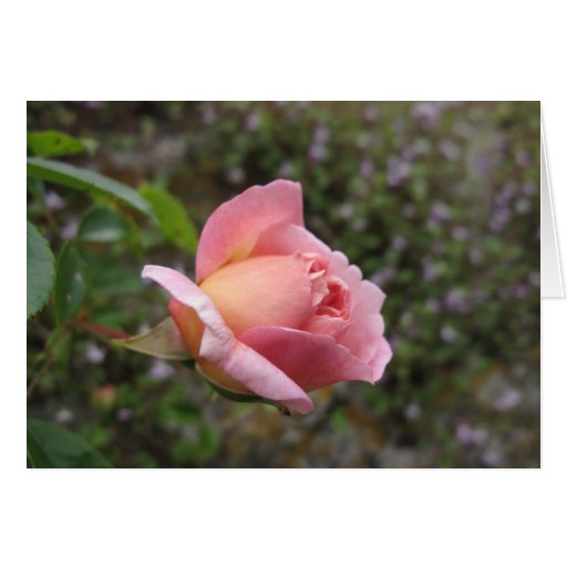 Delicate Pink Rose Bud Cards