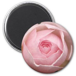 delicate pink rose magnet
